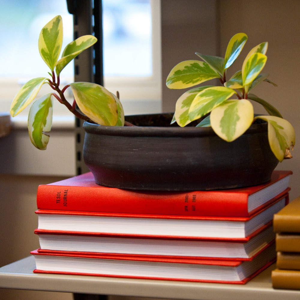 A stack of books with a potted plant on top